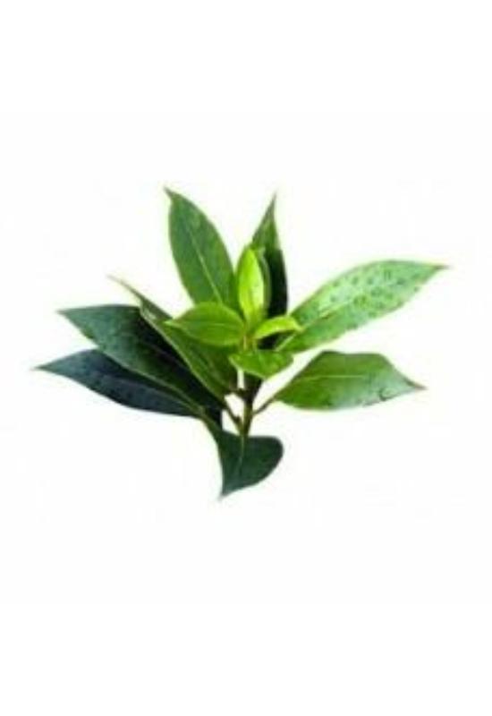 SNIPPP Teafa illóolaj (15ml)AKCIÓ